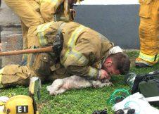 Húsz percig küzdött a tűzoltó az idős kutyus életéért