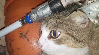 Hihetetlen videón a Pest Megyei Kutató-Mentő Szolgálat bravúros macskamentése