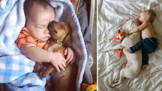 23 bizonyíték, hogy a kutyusok a legjobb alvótársak
