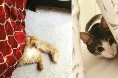 23 bizonyíték, hogy a macskákból tökéletes titkosügynököt lehetne faragni