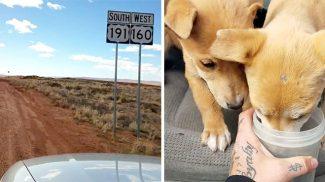 Ezt a két árva kutyust a sivatag közepén találták meg