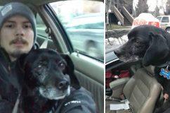 Munkáját kockáztatta a pizzafutár, hogy megmentsen egy kóborló kutyát