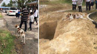 Utolsó útjára is elkísérte gazdáját a hűséges kutyus