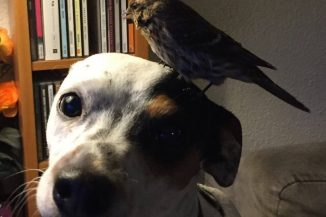 Rendkívüli dolgot tett ez a kutyus: megmentette egy apró madár életét