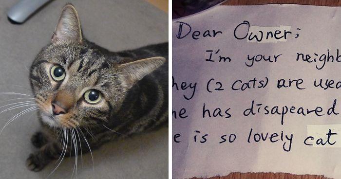 Csak miután elhunyt a cicájuk, akkor tudta meg ez a pár, hogy nem csak az ő életüket változtatta meg