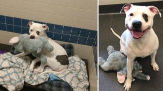 Plüsselefánt vigasztalta a legszomorúbb menhelyi kutyust – így reagált, mikor megtudta, hogy gazdira talált!