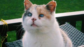 Elveszítette látását, de ezt a cicát semmi sem állíthatja meg, ha kirándulásról van szó