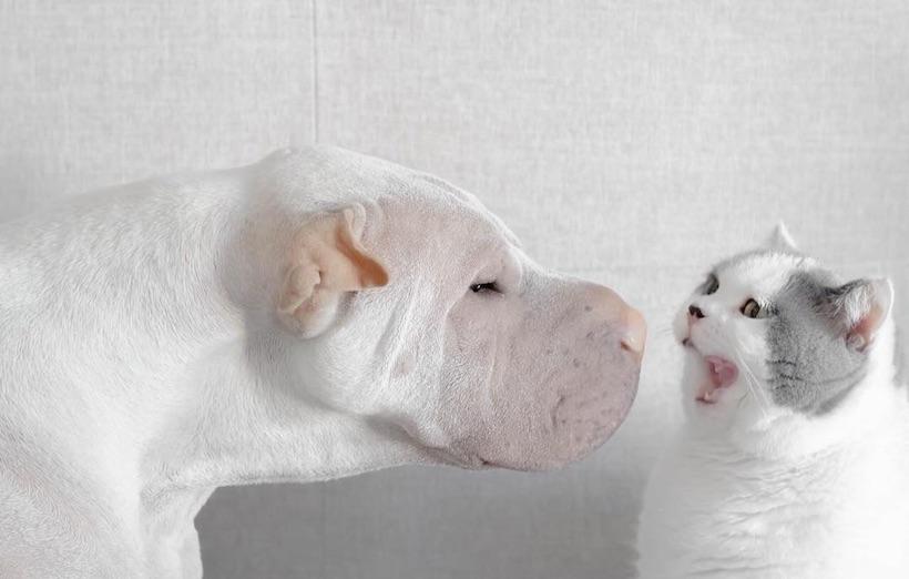 Országos cimborák és egyben az internet legcukibb párosa is ez a cica és kutya