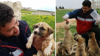 16 fős kutyacsaládot mentett a férfi, aki minden áron gondoskodik Aleppó kóbor állatairól