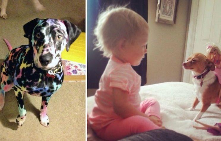 19 nyomós indok arra, hogy miért ne hagyd egyedül a háziállatod a gyerekkel