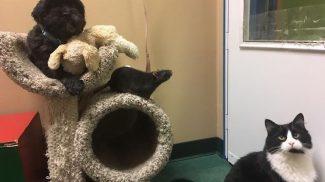 Egy kutya, egy macska és egy patkány megható barátságának története