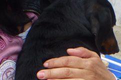 Légpuskával lőtte meg a szomszéd kutyát egy várpalotai férfi