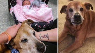 Testvérkéje születését még megvárta az idős, befogadott kutyus