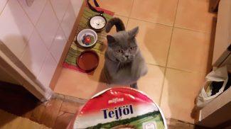 Ismerd meg Pocakot, a cicát, aki folyton könyörög a kajáért