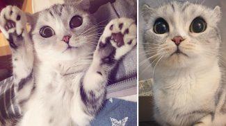 Hatalmas szemeivel azonnal elvarázsol az Instagram egyik legnépszerűbb cicája