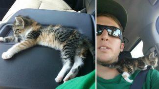 Megállt a kamionos, hogy megmentse ennek a pöttöm cicának az életét