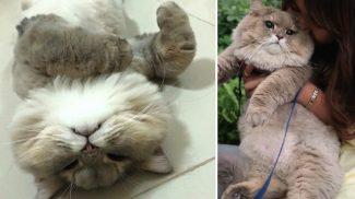 A tömör gyönyör igazi megtestesítője ez a cuki macska