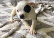 Lemondtak a rendellenességgel született kutyáról, de ő bebizonyította, hogy nincs lehetetlen