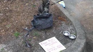 Szívbemarkoló üzenettel hagyták egy kuka mellett ezt a szerencsétlen kutyust