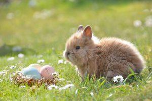 A Budakeszi Vadaspark programdömpingje a tavaszi szünetre