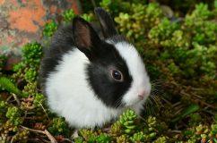 Az élő állat húsvétkor sem játék!