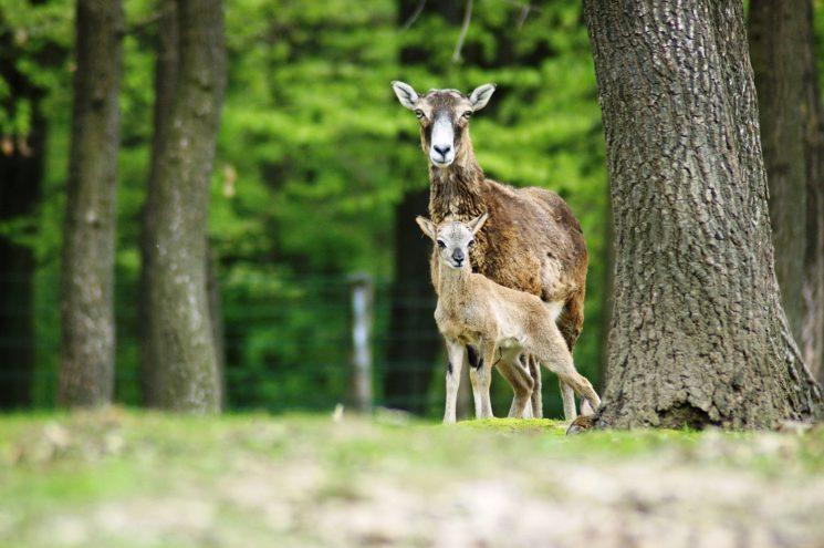 Föld napja a Miskolci Állatkertben – Újszülöttek, előadások és ásványkiállítás