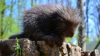 Kúszósül bébi született a Miskolci Állatkertben
