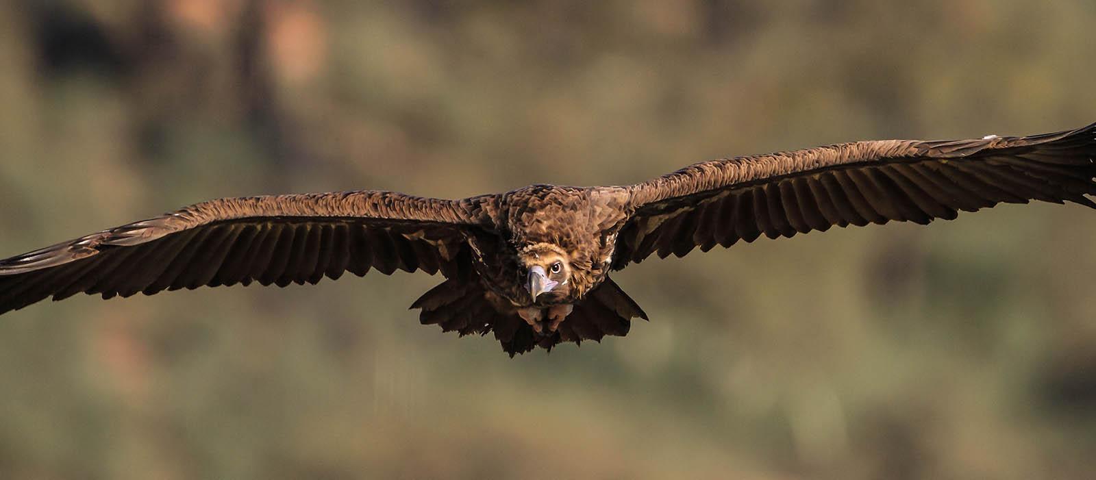 sas repül féreg mászik ki
